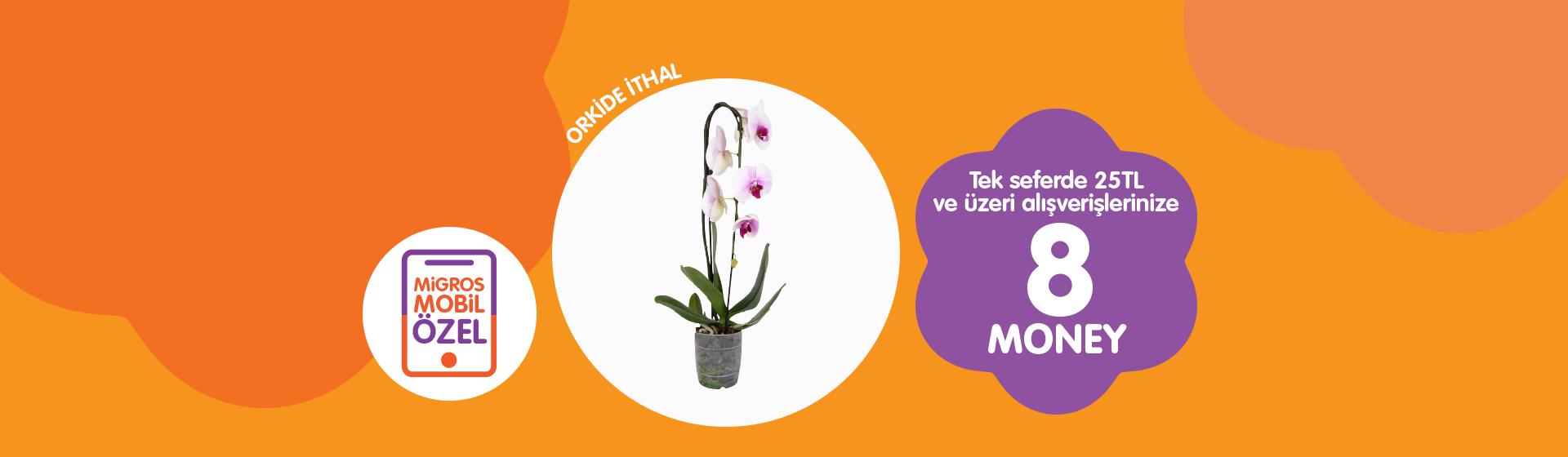 Orkide Money Kampanyası