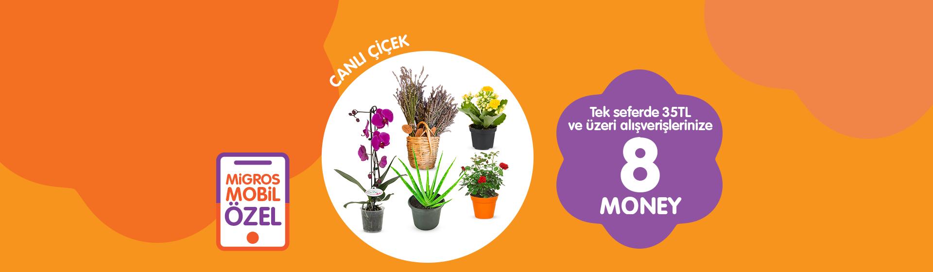 Canlı Çiçek Money Kampanyası